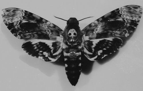 I always wished that I really appreciated Silence of the Lambs just so I could get this tattooed somewhere.