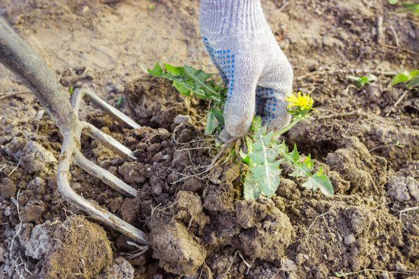 Les 154 meilleures images propos de jardinage sur for Desherbant naturel vinaigre blanc