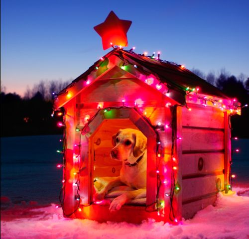 dog house decorated for #christmas