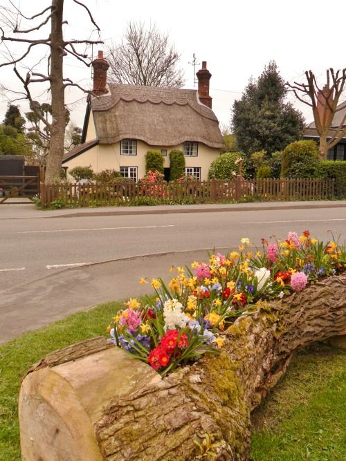 Thatched Cottage,  Market Bosworth, Leicestershire, England Love the old log, dug out to provide area for planting plants looks so natural.