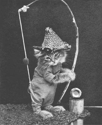 76 best vintage animals with clothes images on pinterest for Cat fishing pole