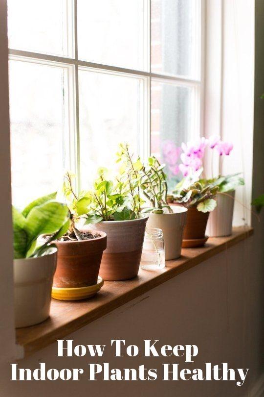 happier houseplants how to keep indoor plants healthy u2014 apartment home remedies
