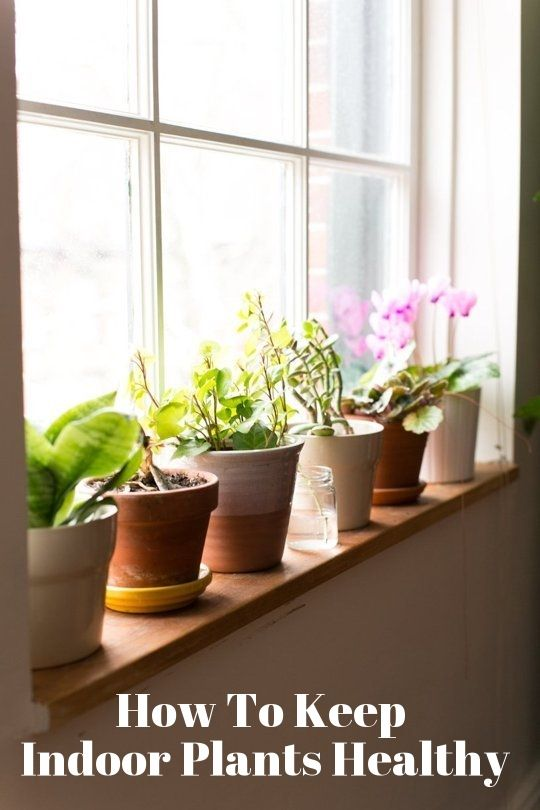 Happier Houseplants: How To Keep Indoor Plants Healthy — Apartment Therapy's Home Remedies | Apartment Therapy