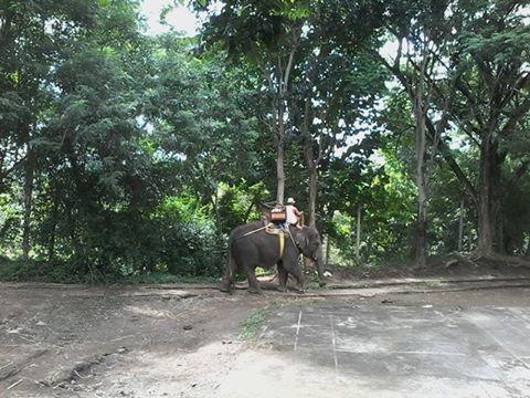 Bali Elephant Ride Package  #BaliElephantRide #BaliTourGuide #BaliPrivateTour #BaliTour
