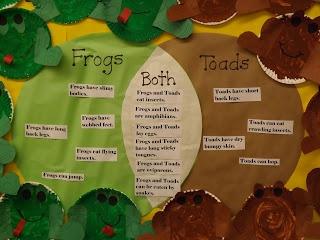 amphibians kindergarten amphibians teaching amphibians frog science ...