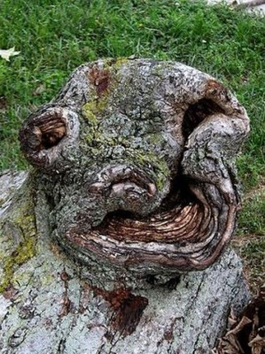 Natural Pareidolia: 13 Faces on Trees                                                                                                                                                                                 Mehr