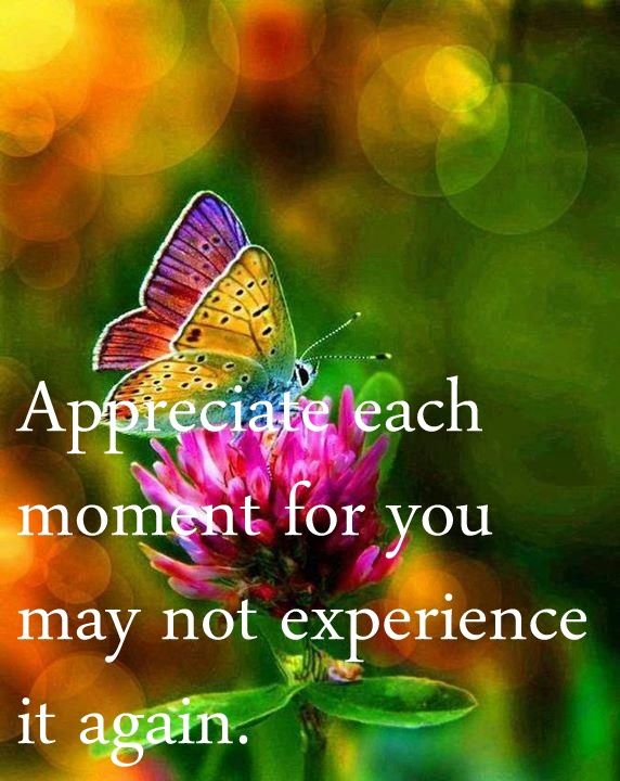 """""""Appreciate each moment for you may not experience it again."""" --- never be the same because everything can't help evolving. Enjoy every moment! #quote #butterfly"""