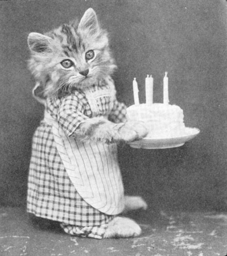 Картинки с днем рождения прикольные кошки