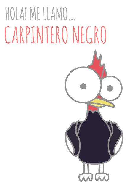 Carpintero Negro