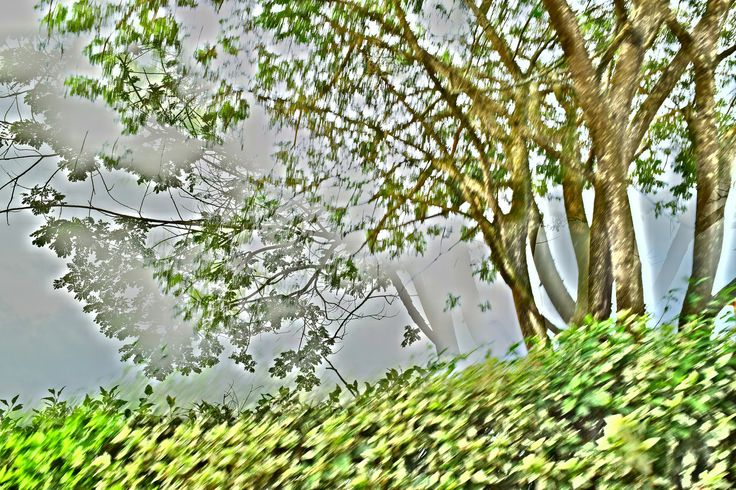 Árbol o arboles? | por santiago restrepo fotos  sustentabilidad