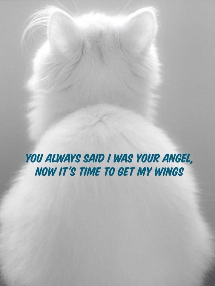 Losing Your Pet Cat