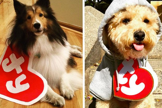 People Are Dressing Their Pets As Beanie Babies And It's Almost Too Much