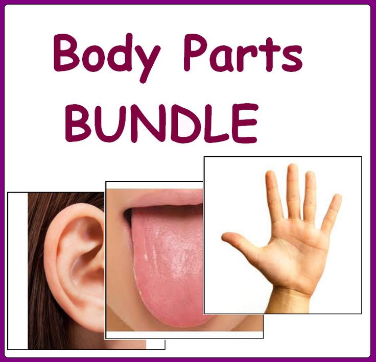 BODY PARTS BUNDLE - Falsh Cards, PECS Cards, Matching Activities, Posters, Games