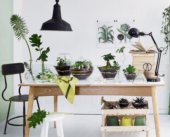 Des terrariums dans des saladiers en verre