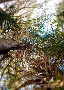 Tanglefoot Lane Photography - nature