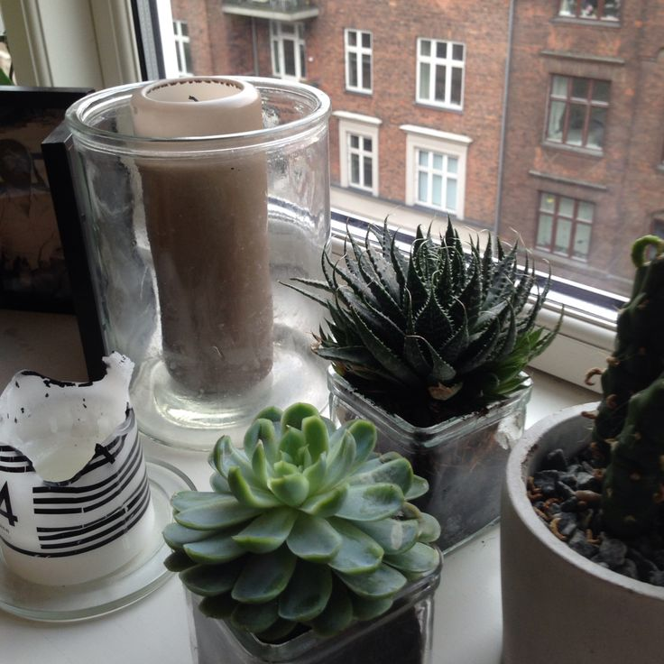 Candles and plants by nordicperspective.com