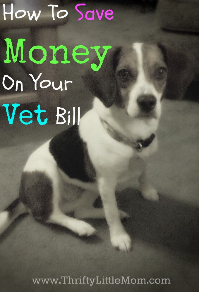 How To Save Money On Your Vet Bill- Tips and tricks for reducing the cost of your animal's healthcare needs!