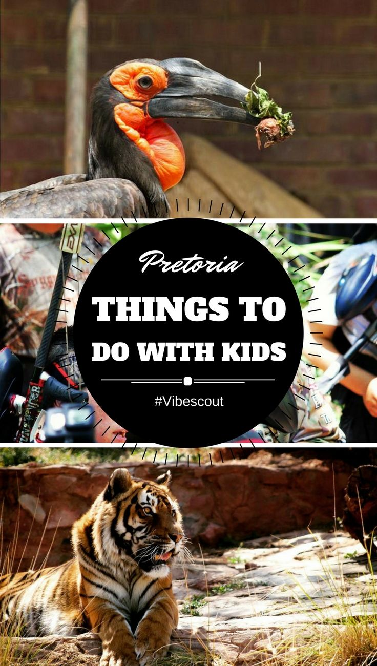 Children often feel left out on holiday as there aren't many child-friendly activities available in most cities, but Pretoria does not disappoint in this regard. #pretoriaZoo#zitapark#gotchapainball
