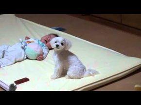 Dieser Hund kann das Geschrei des kleinen Babys einfach nicht mehr ertragen und tut DAS – OMG. | LikeMag | We Like You