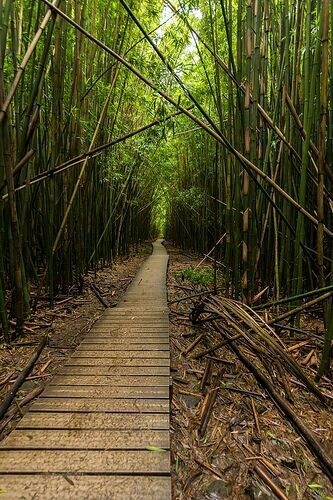 Bambo Forest Maui HI