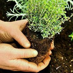Kräuter zurückschneiden, pflanzen oder säen …