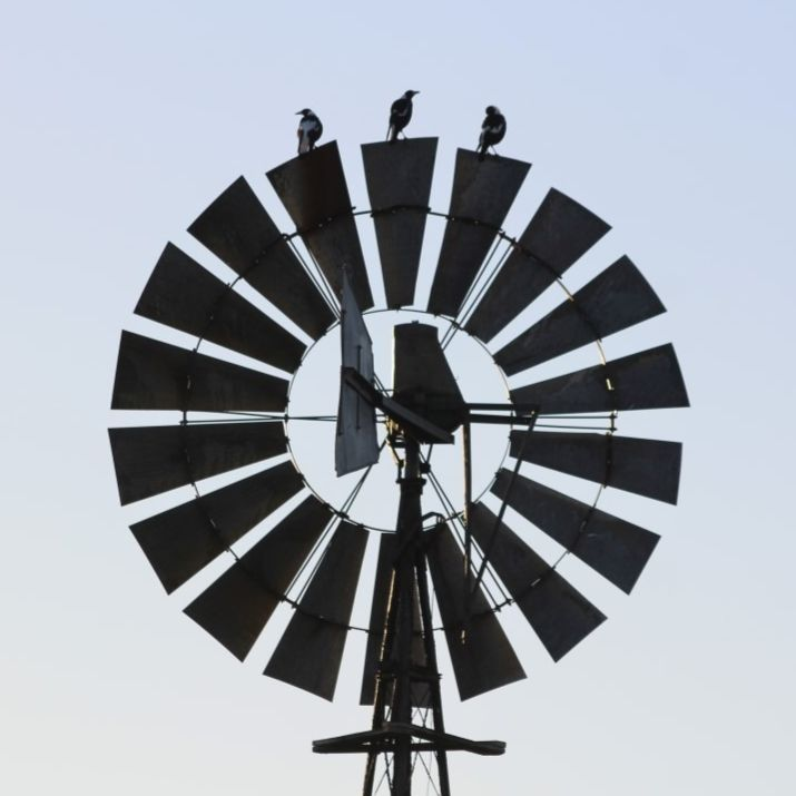 Birds on a windmill.  Made me think of Leonard Cohen and his Bird on a wire.  #startthedaywithsomethingbeautiful