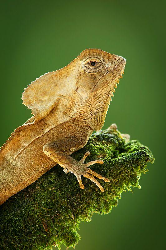 Juan Carlos Vindas Photography » Snakes and reptiles