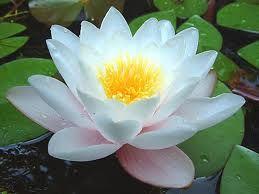 flores exoticas - Buscar con Google