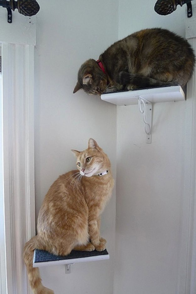 Build your own cat perches. | 26 DIYs Your Pet Will Totally Appreciate