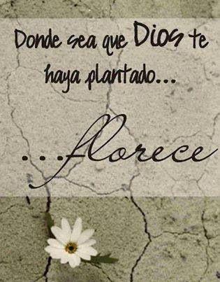 #Cita #Florece