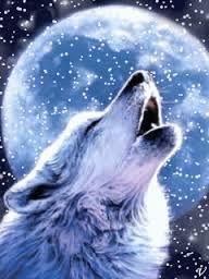 lobos negros - Pesquisa Google