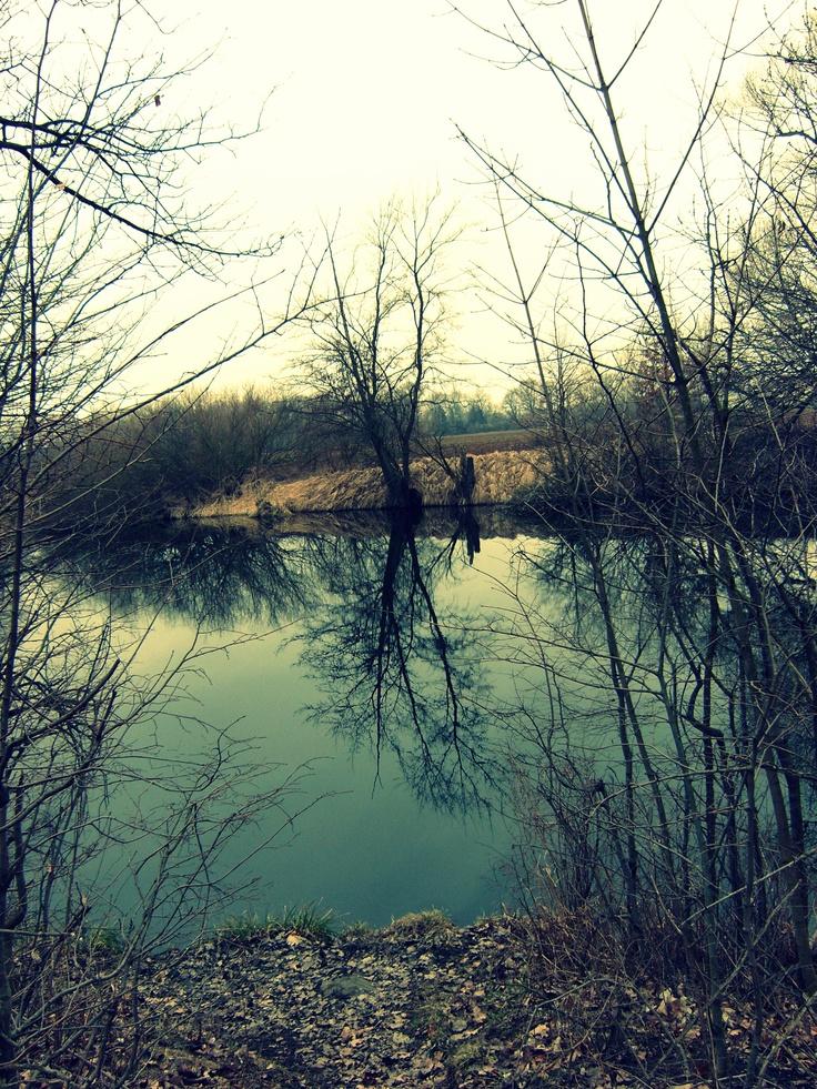 Vodní plocha u Rosic n.Labem, Pardubice, ČR