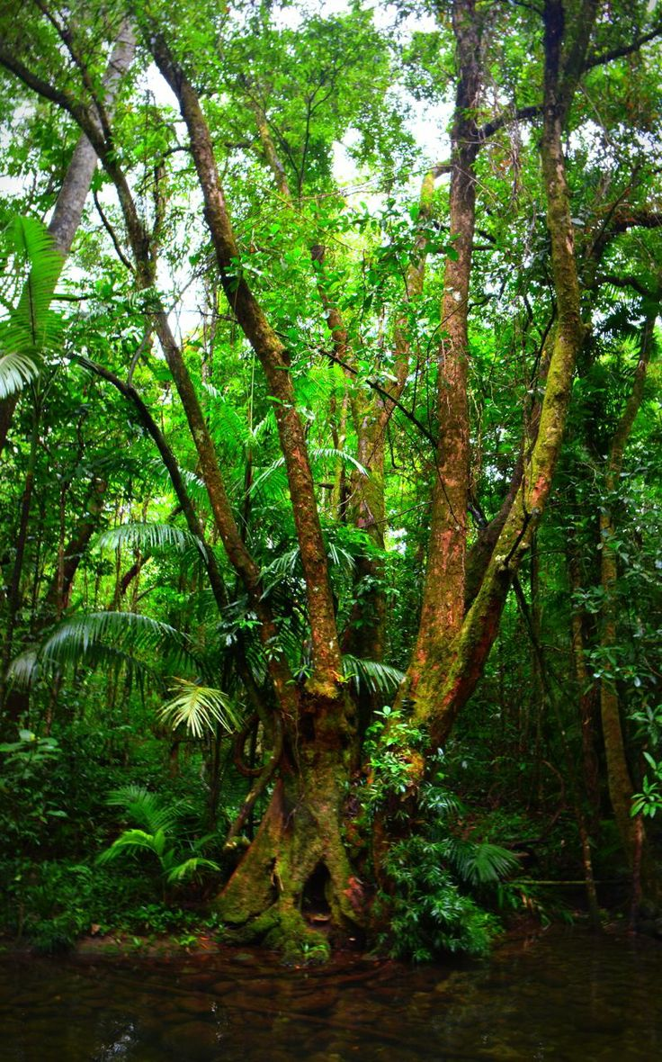 1000 images about daintree rainforest on pinterest for Australian rainforest