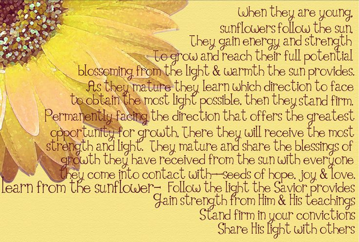 Cute LDS Quotes | Follow the Sun & Learn from the Sunflower | love, laugh & learn ...