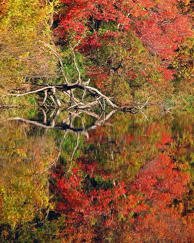 Colorful Fall Reflections, Massapequa Nature Preserve conserved by Nassau County, Long Island, New York