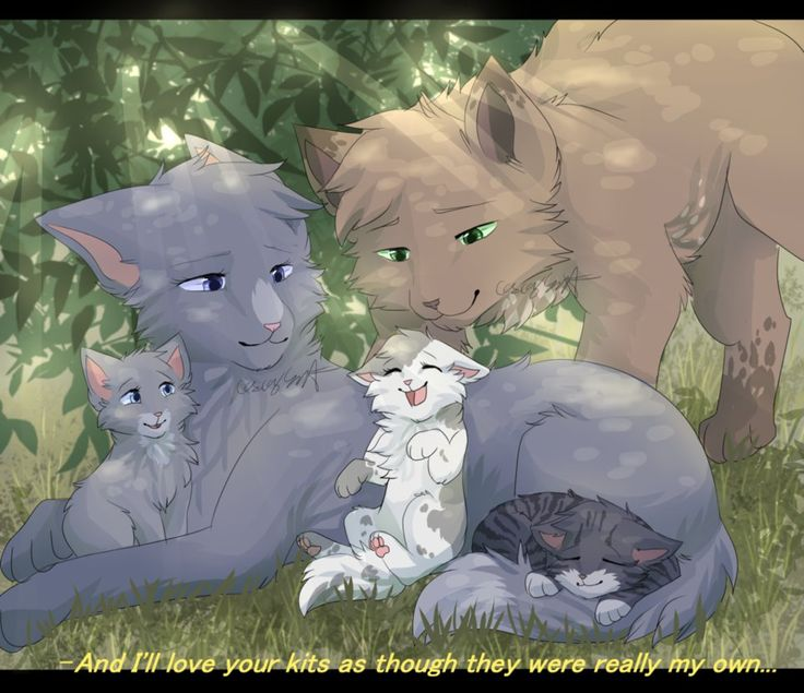 Images Of Warrior Cat Kits