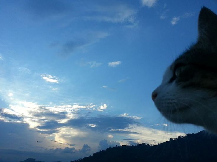 Narices de gato y nubes. Por Nathaly.