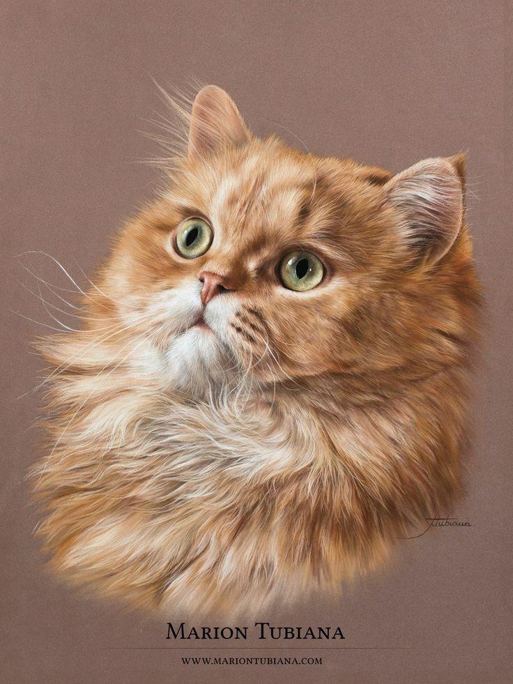 Marion Tubiana Cat art, Cat painting, Watercolor cat