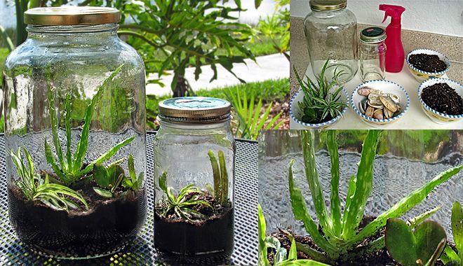 Una buena alternativa a reciclar el vidrio en los contenedores verdes es regalarnos un oasis de vida dentro de un envase de cristal inservible. Son los lla