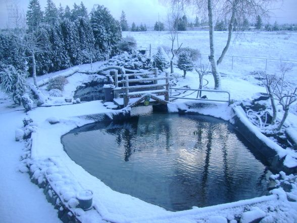 10 images about small garden ponds on pinterest for Winter garden pool