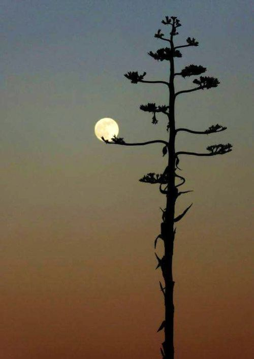 a little creepy but I love the way her branches dip into the moon, as if she were holding it with the delicacy of a flower
