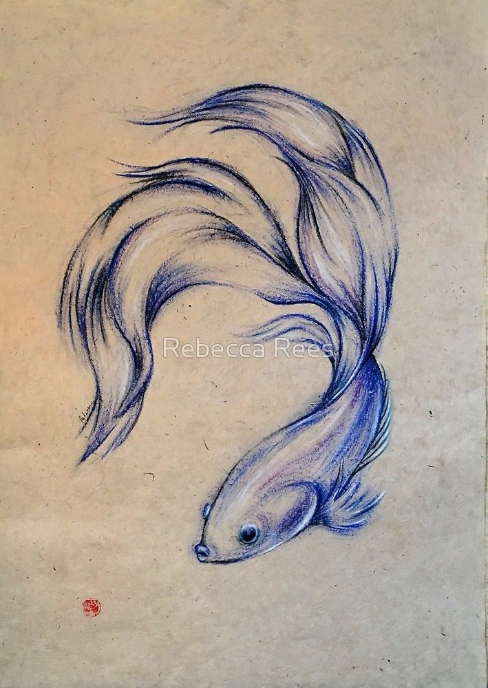 Realistic Fish Drawing : realistic, drawing, Angel, Siamese, Fighting, Pastel, Paper, Drawing