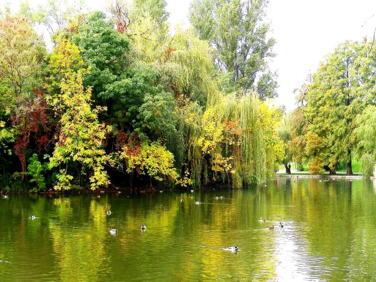 The Virgin Island in Bucharest – one of the 5 small islands spread across the lake of Alexandru Ioan Cuza Park (IOR Park). This tiny island is unique because it has developed its own ecosystem, providing shelter for a lot of species: ducks, swans, turtles, water snakes, seagulls and many species of insects. It's a protected area so you can't set foot on it, although you can get close by renting a boat, stroll around it and admire the wild animals.