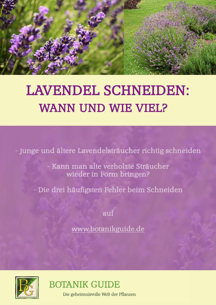 25 melhores ideias sobre wann lavendel schneiden no. Black Bedroom Furniture Sets. Home Design Ideas