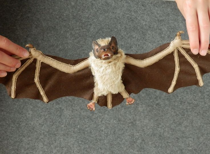 Real bat. With wings spread. Made by Juditheart