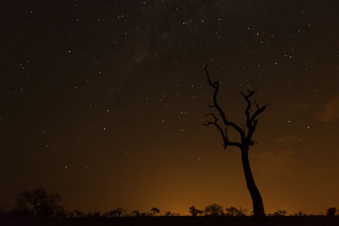 An ancient dead Leadwood tree is silhouetted by the African night sky. Photograph by Simon Smit.