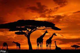 Travel Destination - Africa