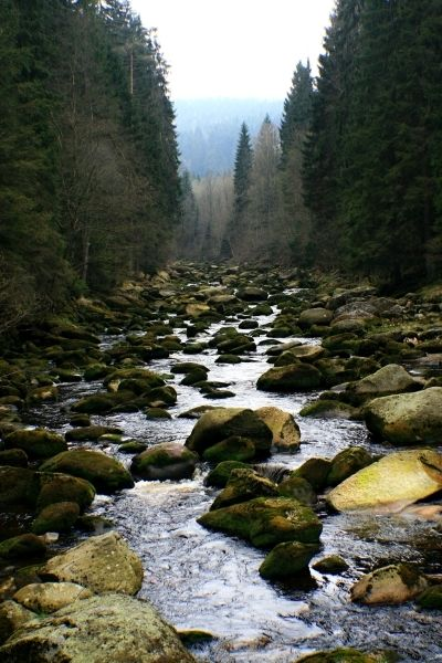 Povydří na Šumavě, reportáž  s tipy na výlet zde http://www.gastrovylety.cz/romantika-jarniho-povydri-aneb-vylet-sumavu-ve-stinu-karla-klostermanna/