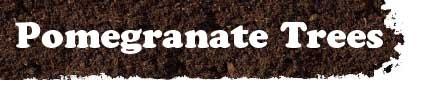Pomegranate Tree, Pomegranate Trees, Pomegranate Tree Nursery, New Free Video Sale, Buy Online ~~~~ Hmmm. Tree source.....maybe.
