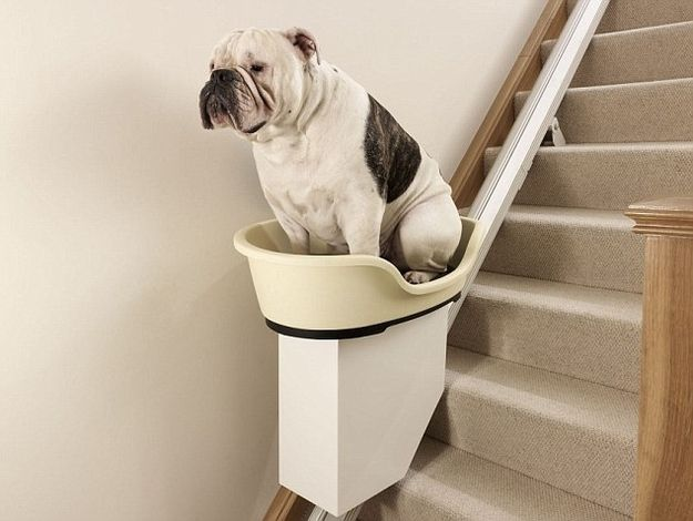 Step One: Acquire Grossly Overweight Pet  Step Two: Acquire Sufficient Cash to Purchase Stairlift for Afformentione Grossly Overweight Pet.  Step Three: Sit Back and Enjoy.